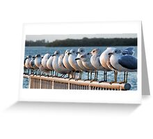 A Gathering Of Gulls  Greeting Card