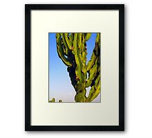 Cactus with moon Framed Print