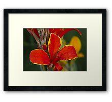 lily in spring Framed Print