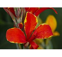 lily in spring Photographic Print