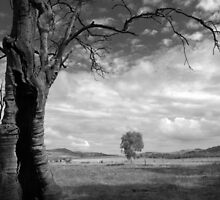 Scary Tree - Gunyah Road, Wilmington. by Ben Loveday