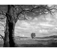 Scary Tree - Gunyah Road, Wilmington. Photographic Print