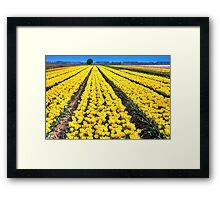 Yellow Tulips for Easter Framed Print