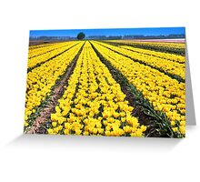 Yellow Tulips for Easter Greeting Card