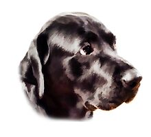 The Black Labrador  by brijo