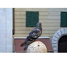 Pigeon in the city Photographic Print
