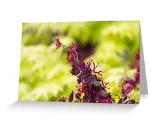 maple in spring Greeting Card
