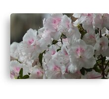 flowers in spring Canvas Print