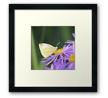 Small White Butterfly Framed Print
