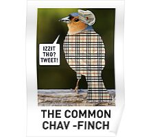 CHAV-FINCH GREETING CARD Poster