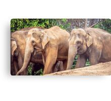 Dirty Brown Elephants Metal Print