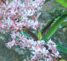 Stream Lillies At Lamington Sticker