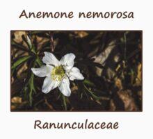 Anemone nemorosa Kids Clothes