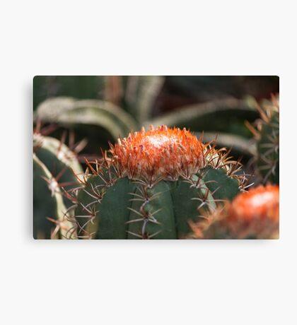 succulent plant Canvas Print