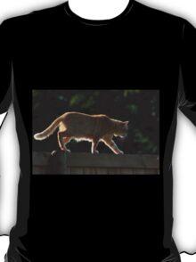 Ginger cat walking on garden fence T-Shirt