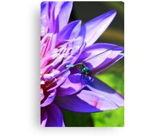 The Dragonfly and the Waterlily Metal Print