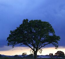 Tree Against Night Sky - A Field in Mid Wales, UK by Jacqueline Longhurst