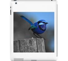 Blue fairy wren Western. Australia iPad Case/Skin