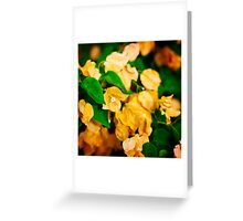 Bougainvillea flowers in a garden. Bright orange flowers.  Greeting Card