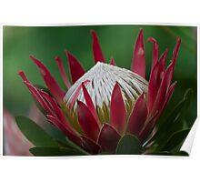 exotic flower Poster