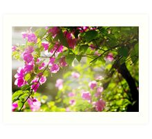 Bougainvillea flowers in a garden in a sundown light Art Print