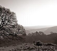 Morning Light by Bernard Cavanagh