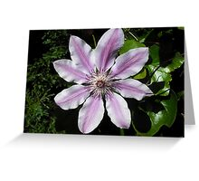 Clematis Nellie Moser Greeting Card