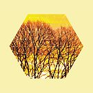 Nature and Geometry - Trees and Sunset by Denis Marsili