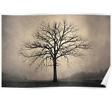 Bare Tree and Fog Toned Poster