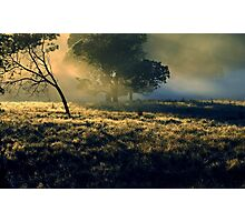 Near Mount Field National Park Photographic Print