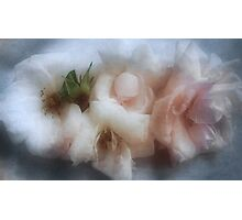 The Softness of Roses Photographic Print
