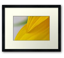Flower Petal Yellow  Framed Print