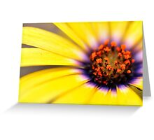 African Daisy Yellow Greeting Card