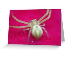 Spider on Flower Greeting Card