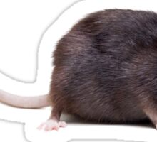 Rat Sticker - Practical joke - Medium or large is best Sticker