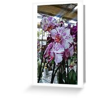 Orchids white and purple Greeting Card