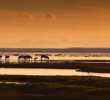 Marsh ponies Loughor estuary by Leighton Collins