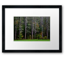 Fall Color at the Forest's Edge Framed Print