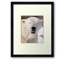 Polar Bears Smile too.  Framed Print