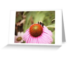 Pink Daisy With Bee Greeting Card