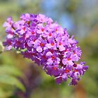 Butterfly Bush by Linda  Makiej