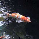 Kyoto Sacred Carp by Sue Ballyn