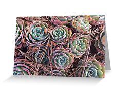 Succulents & Needles Greeting Card