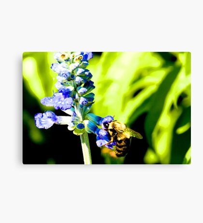 Bee's Knees Canvas Print