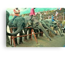 Thailand, Elephants Canvas Print