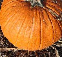 Fall 2012 pumpkin picking by Natalie DiTrapani