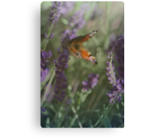 Lavender in the Wind Canvas Print