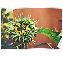 a sunflower in brooklyn Poster