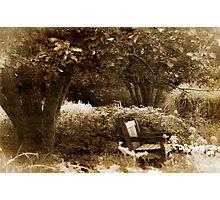 Sit Under the Apple Tree Photographic Print