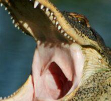 Gator Chomp Sticker